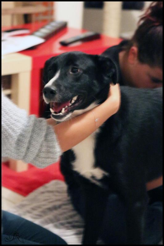 osthéopathie pour chien