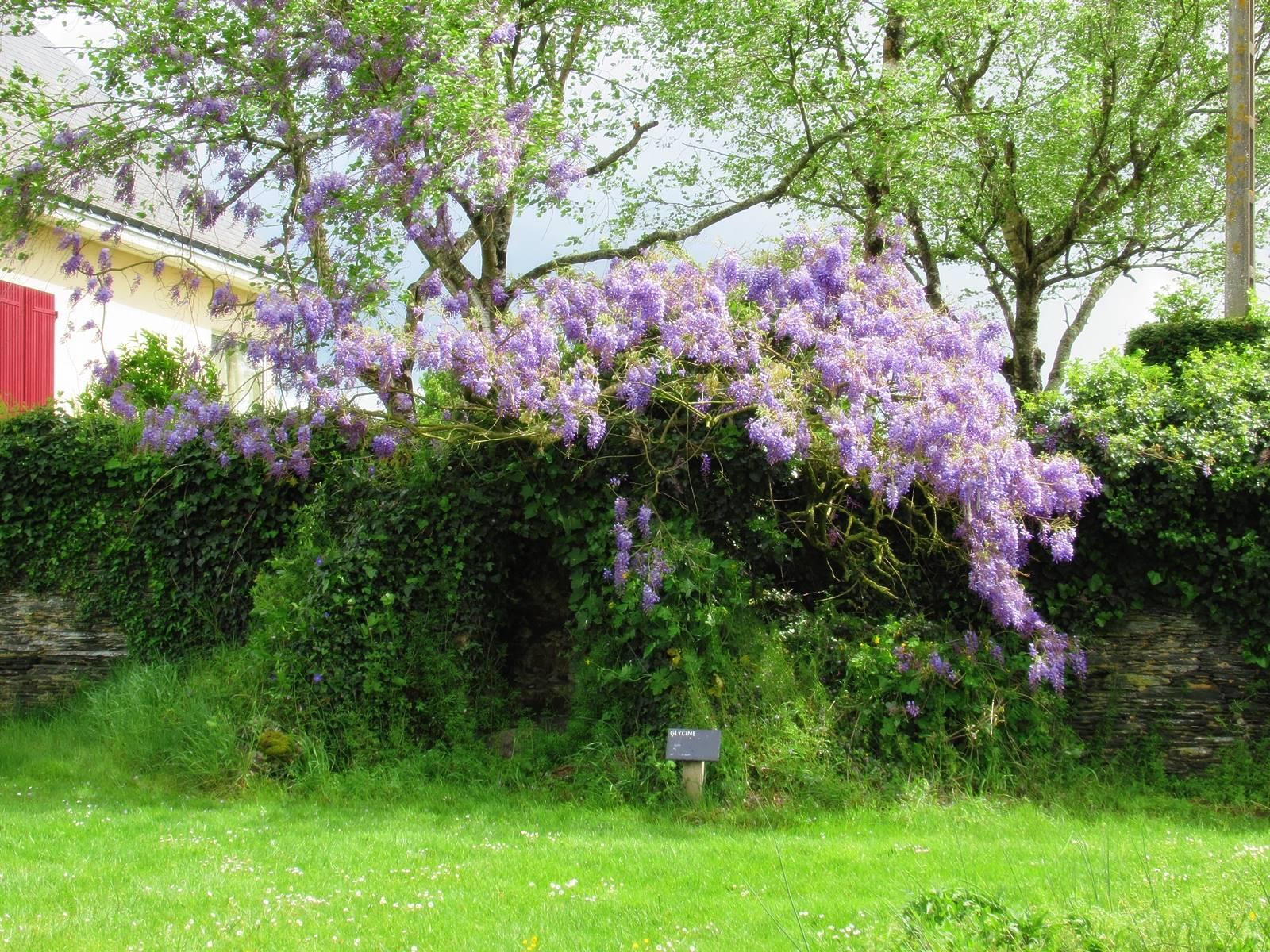 Arboretum sophie trebuchet 10