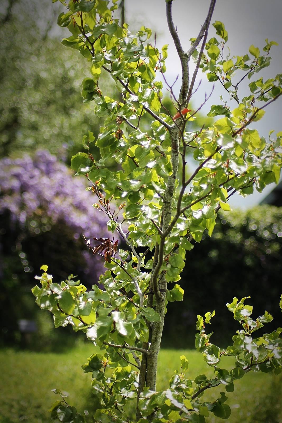 Arboretum sophie trebuchet 6