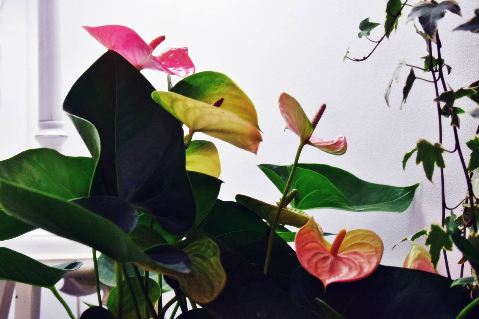 Atelier couronnes fleur photos chateaubriant 18