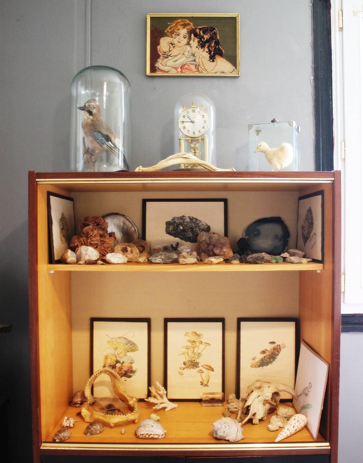 Cabinet des curiosites 25