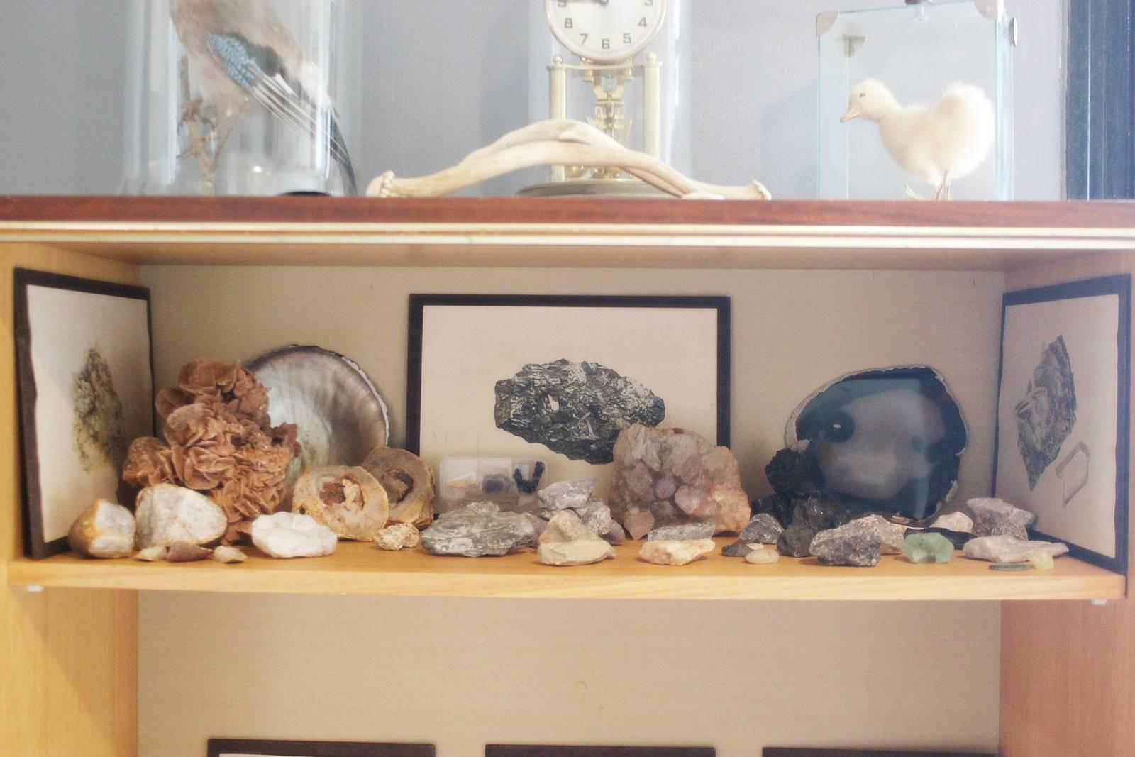 Cabinet des curiosites 26