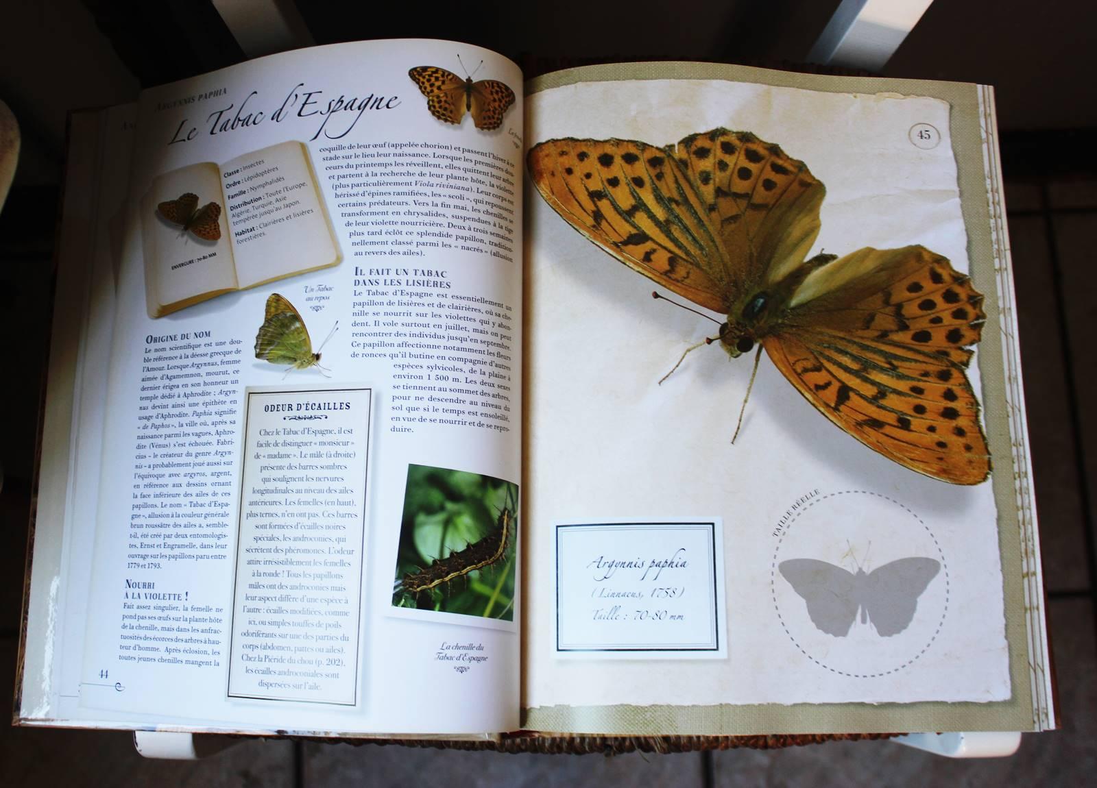 Collection d insectes livre larousse 1