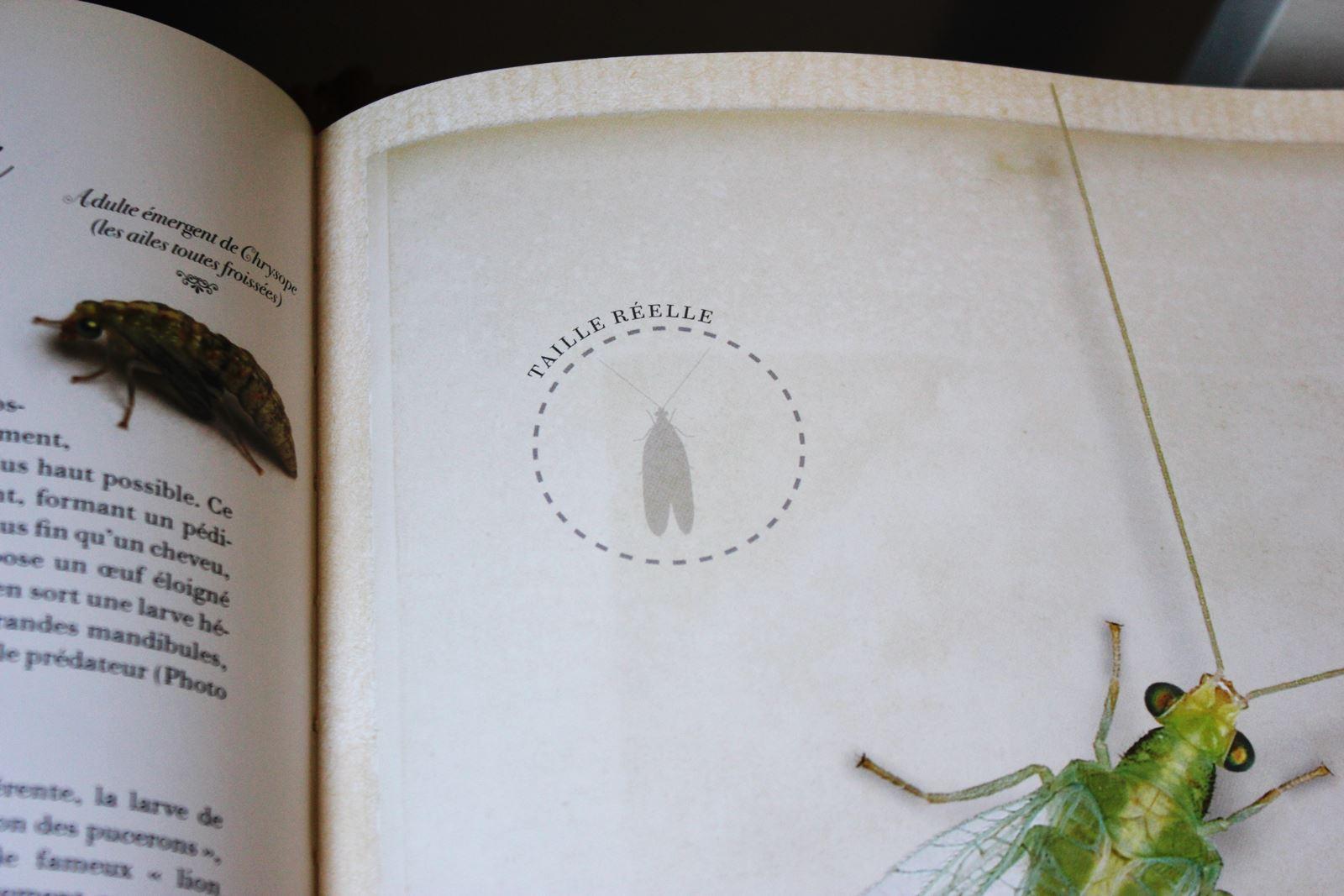 Collection d insectes livre larousse 3