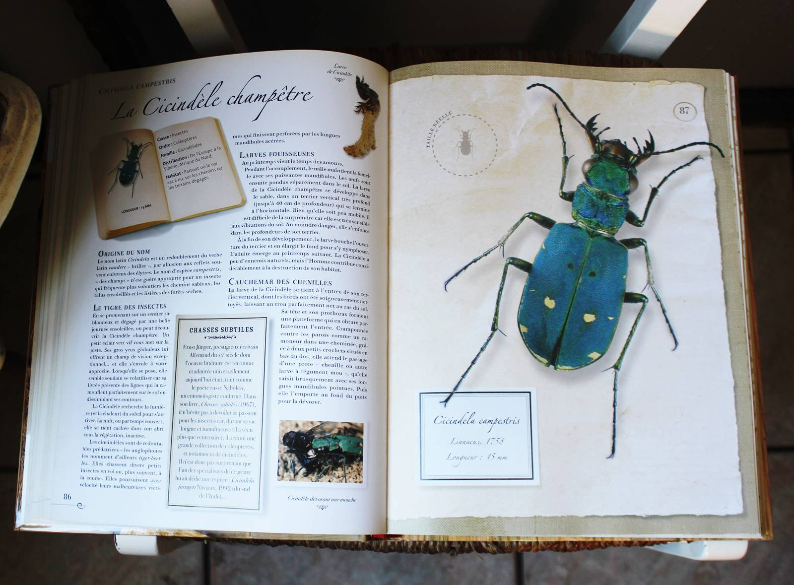 Collection d insectes livre larousse 5