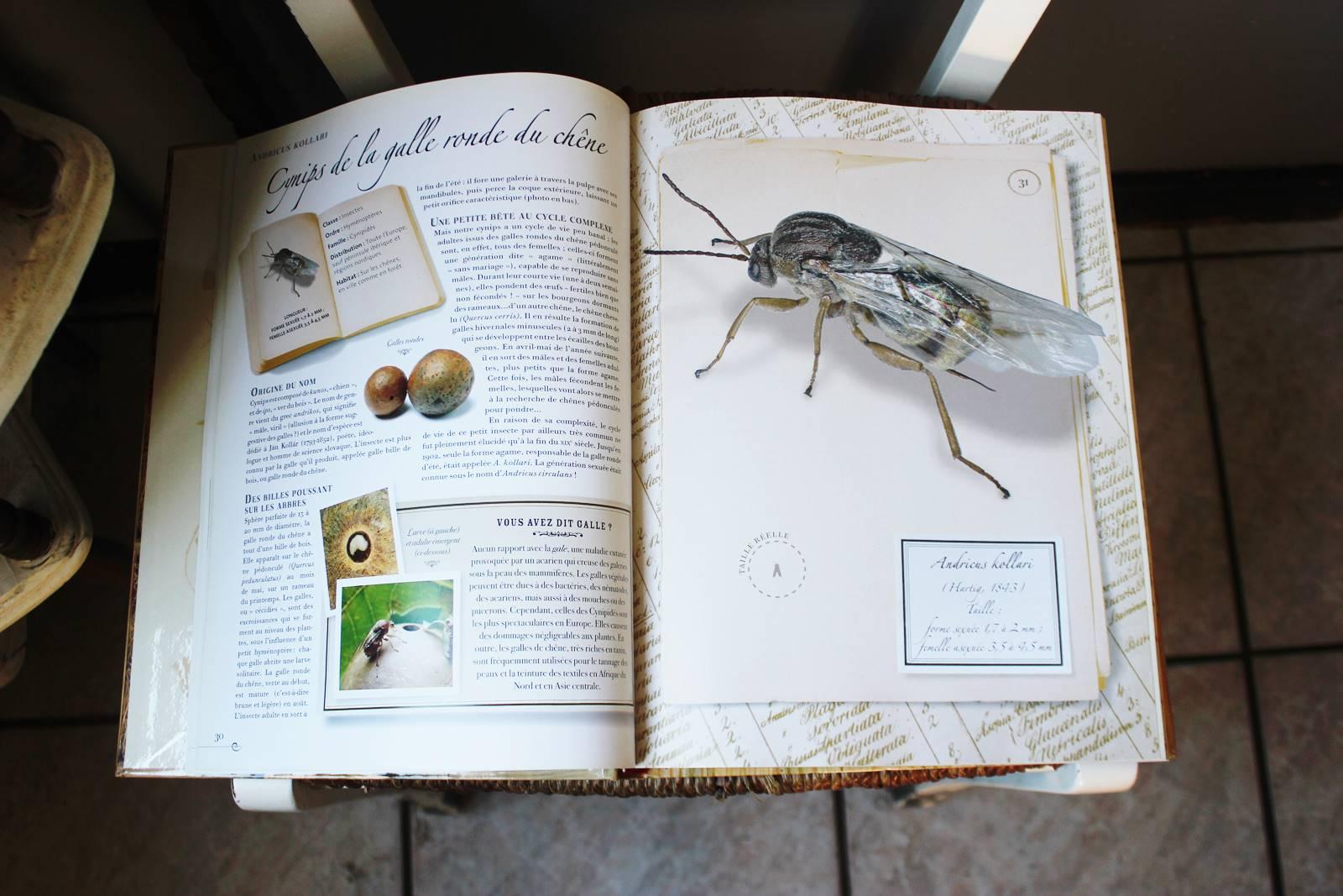 Collection d insectes livre larousse