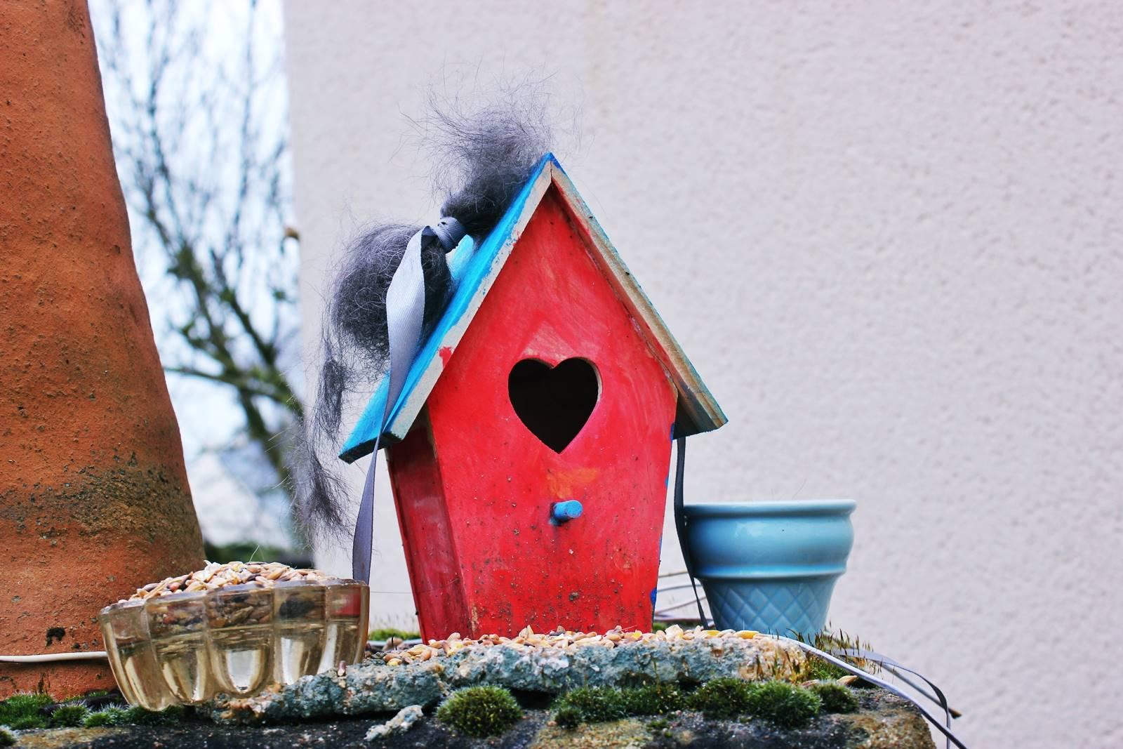 Comment aider les oiseaux en hiver