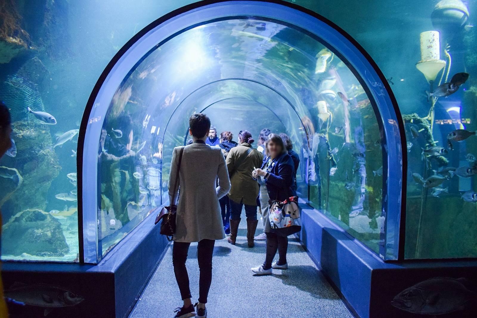 Croisic ocearium avis photos 13
