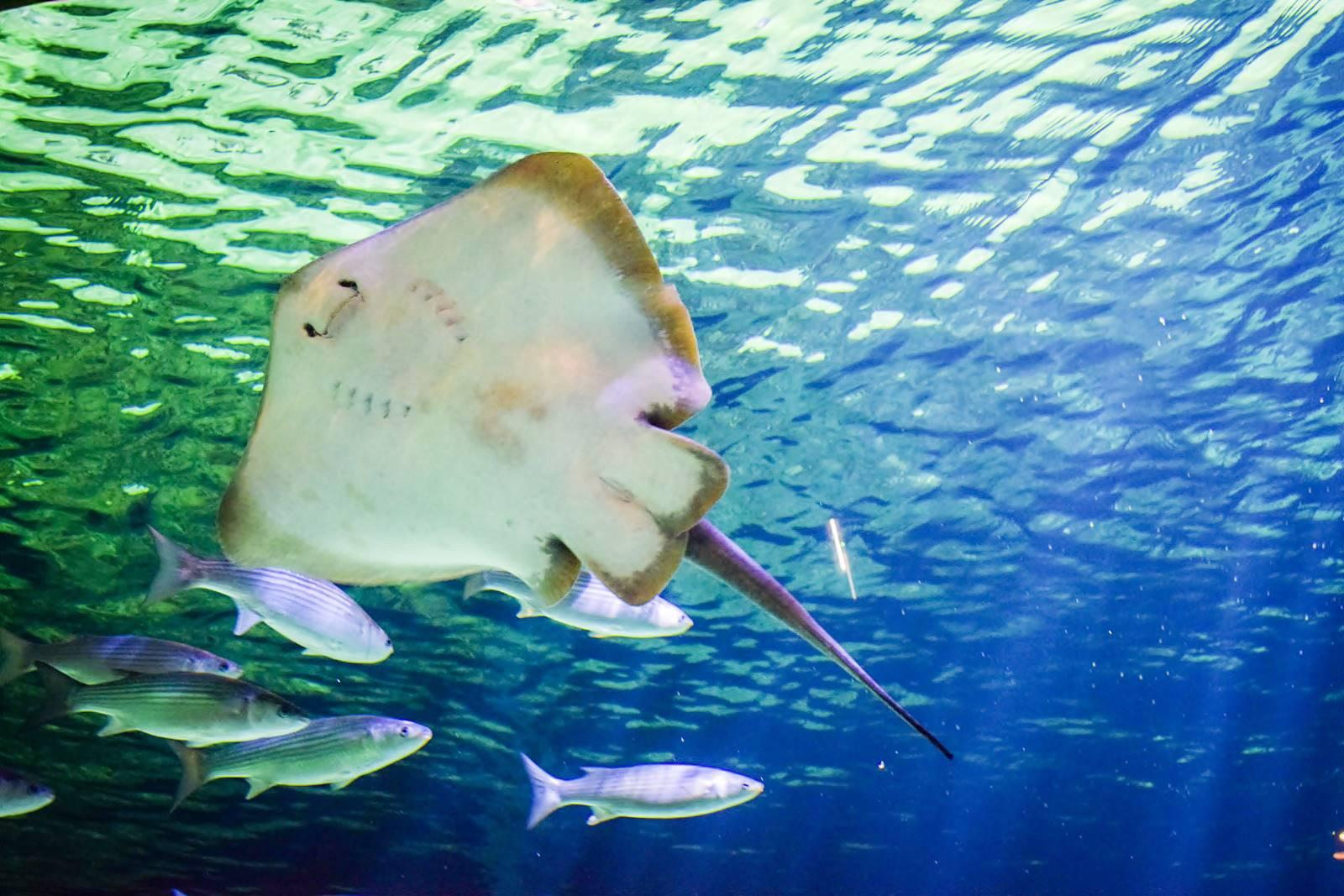 Croisic ocearium avis photos 15