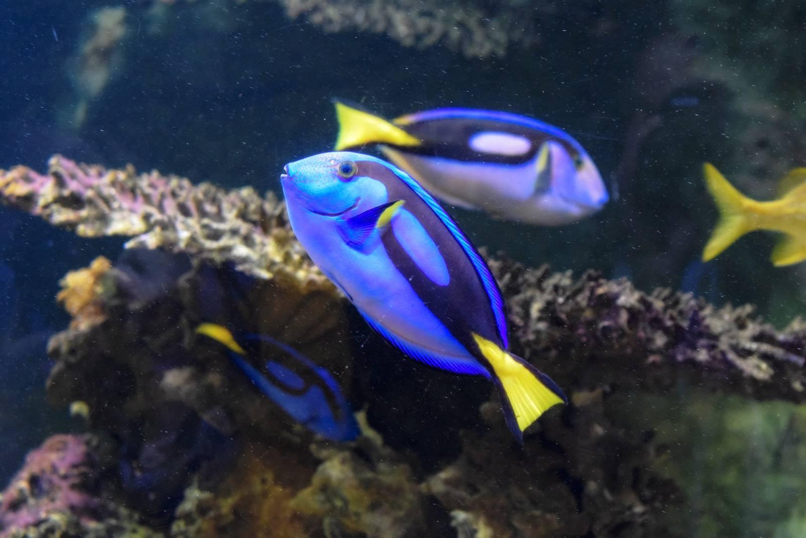 Croisic ocearium avis photos 3