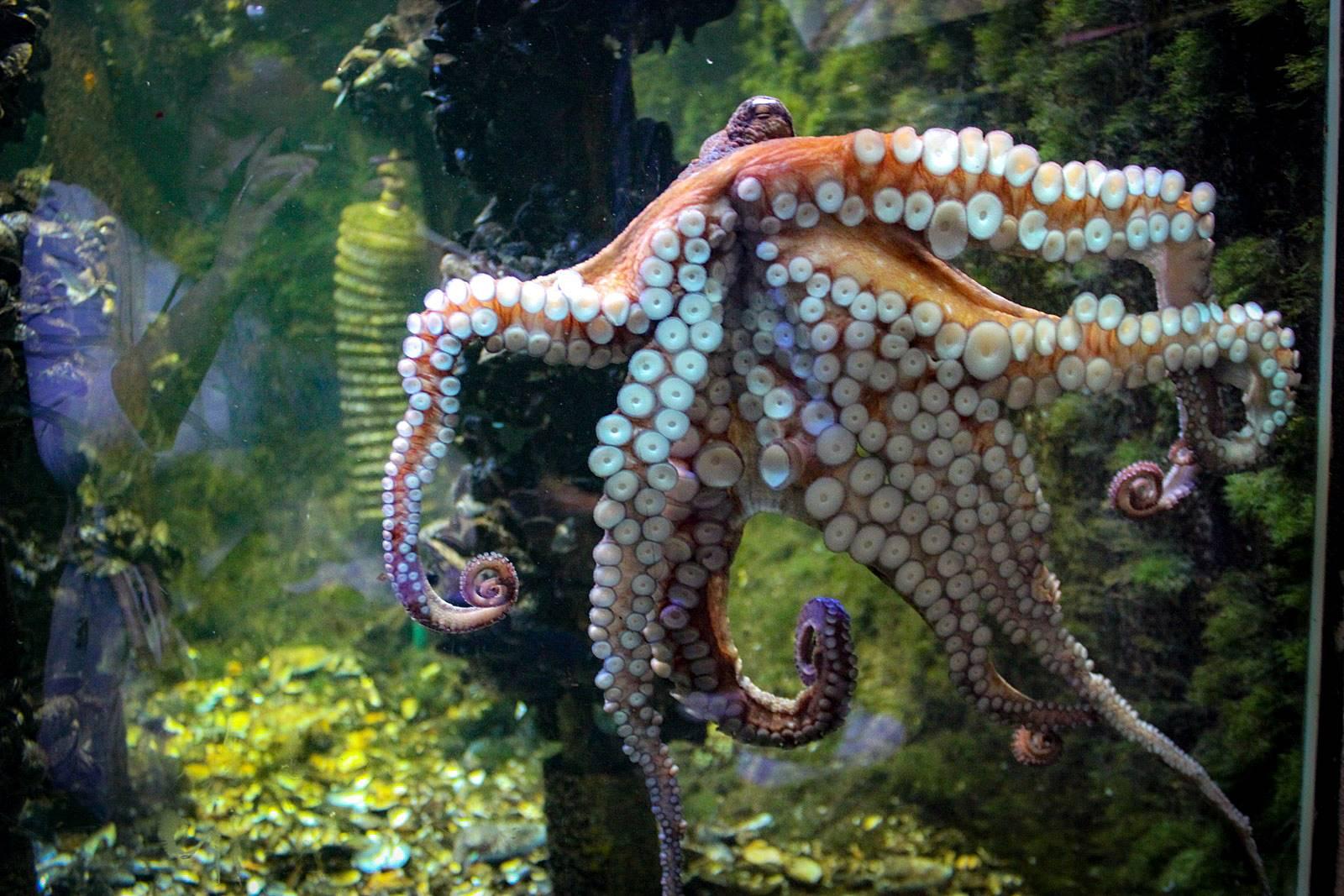 Croisic ocearium avis photos 5