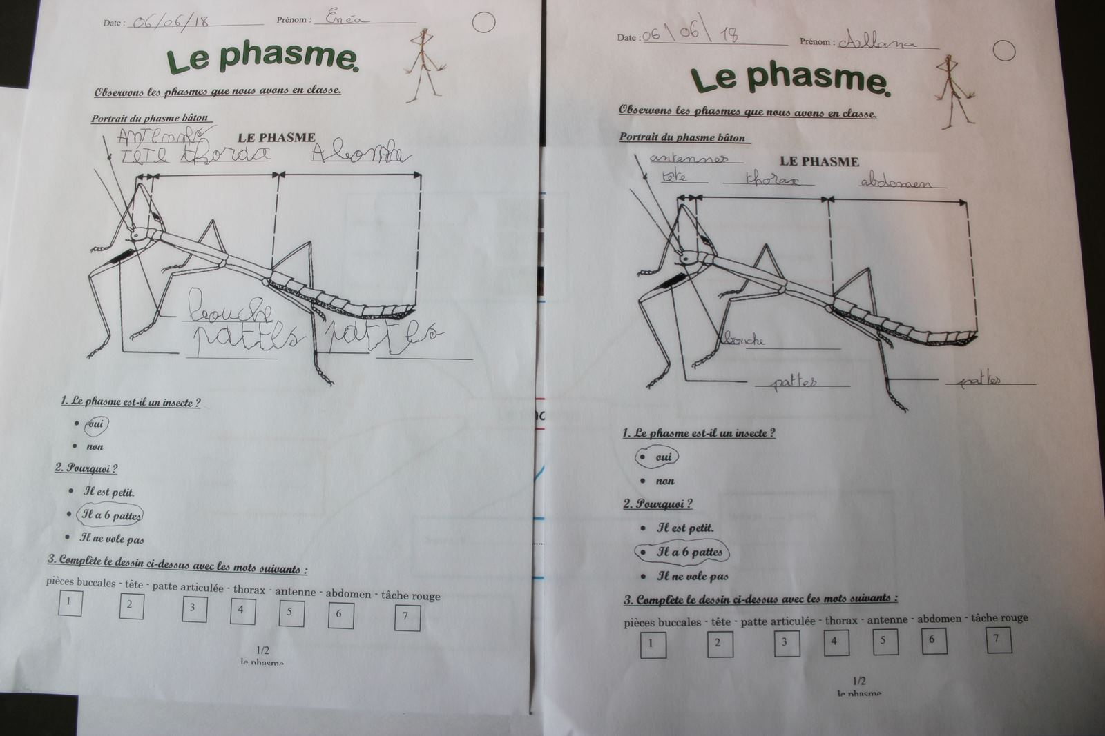 Fiche exercices phasme ief 2