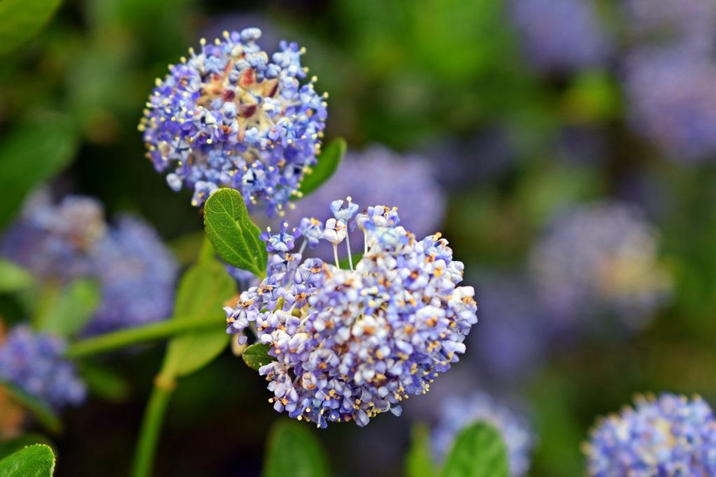 Fleur pluie 1