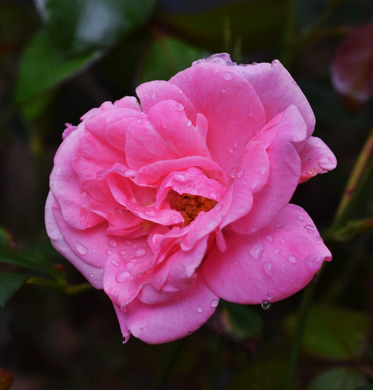 Fleur pluie 3