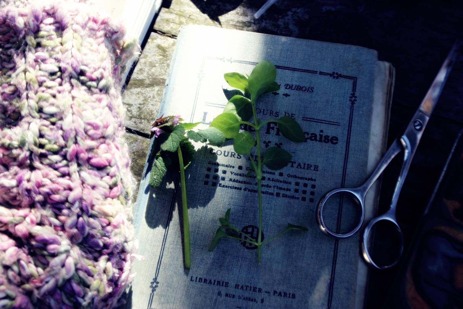 Herbier nene vintage 8