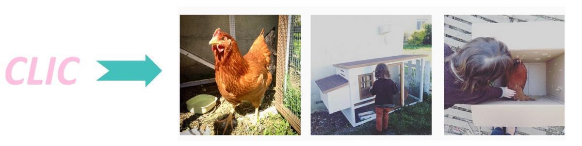 Instagram poule