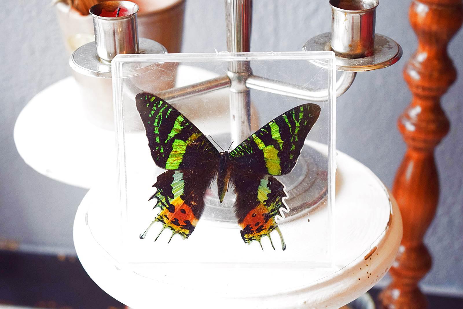 Instant vintage 39 papillon