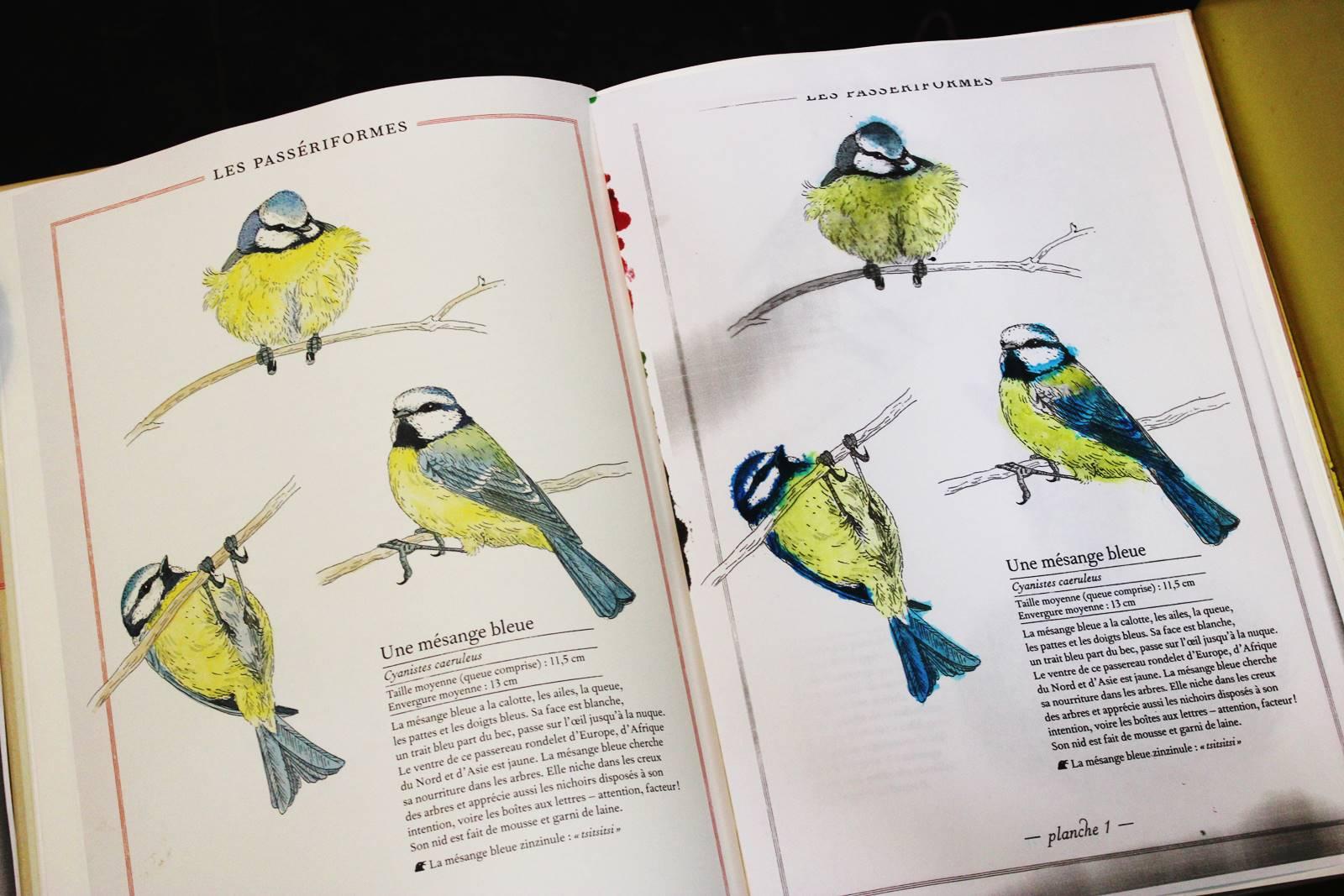 Inventaires oiseaux mesanges 1