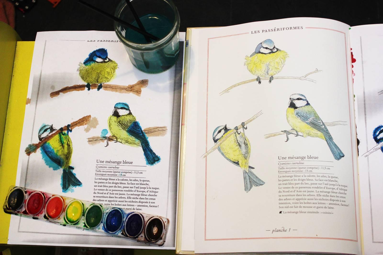 Inventaires oiseaux mesanges 2