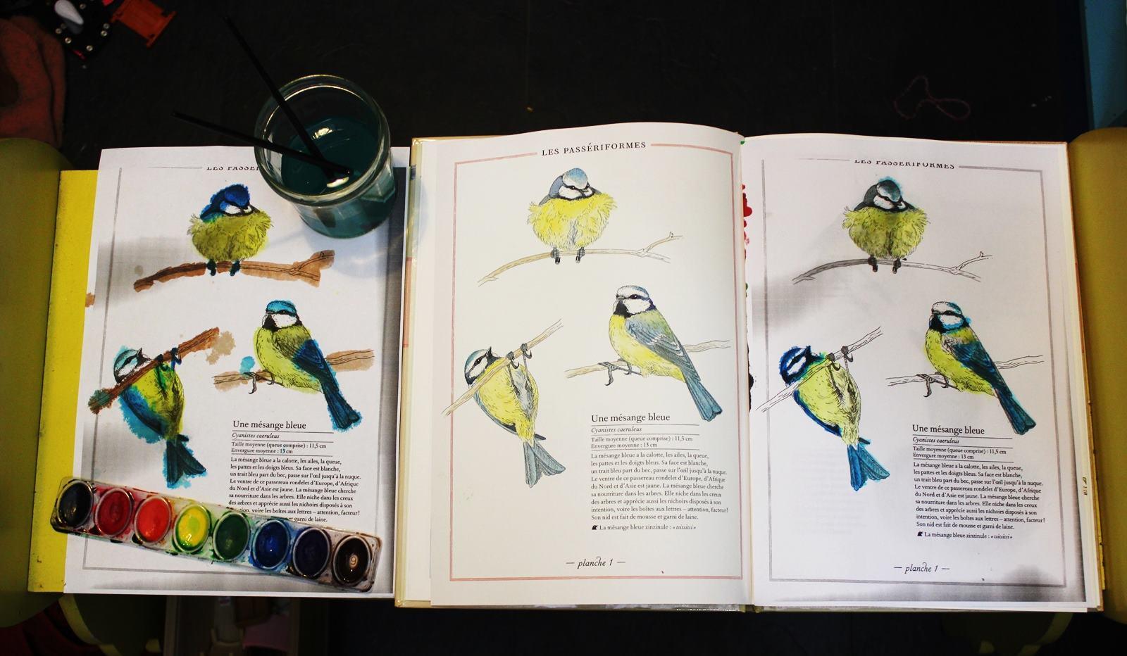 Inventaires oiseaux mesanges 3