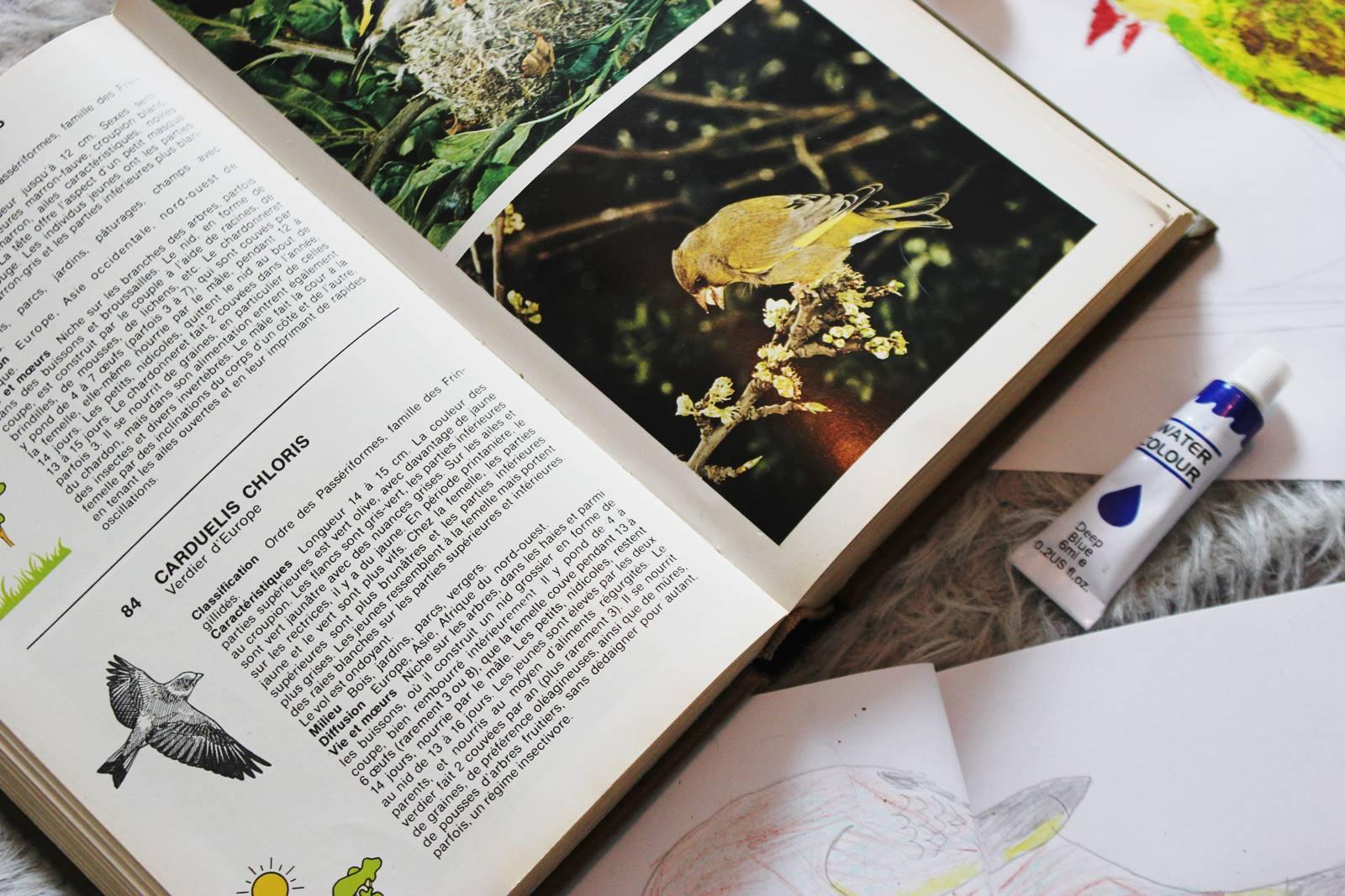 L inventaire des oiseaux verdier d europe 1
