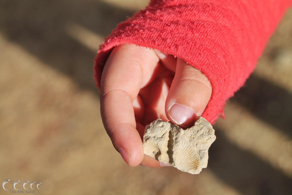 L oppidum d enserune 11