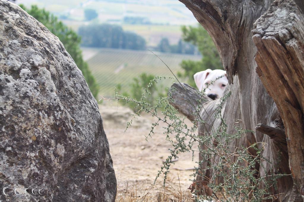 L oppidum d enserune 12