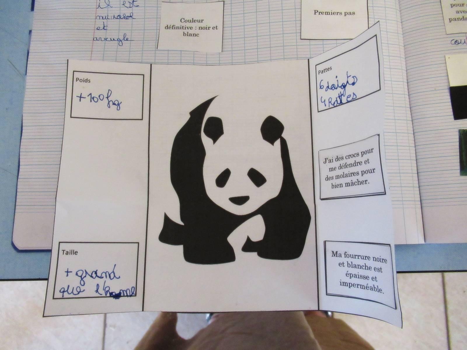 Lapbook panda ief 10