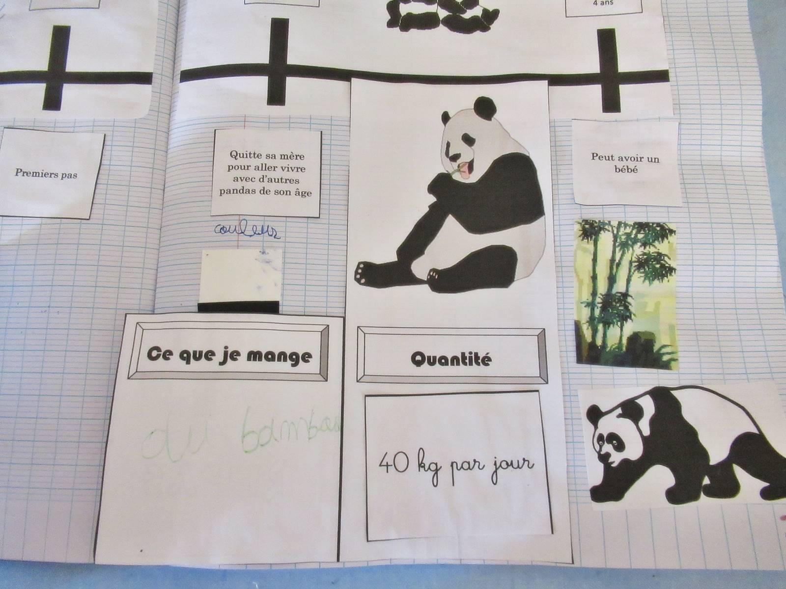 Lapbook panda ief 11