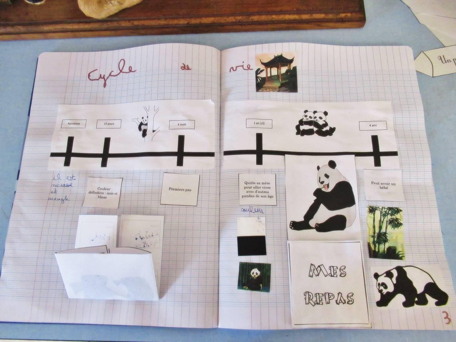 Lapbook panda ief 9