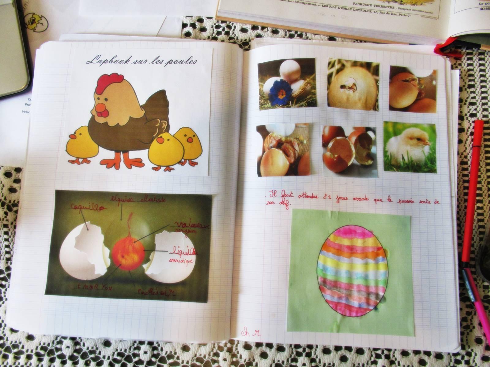 Lapbook poule 3