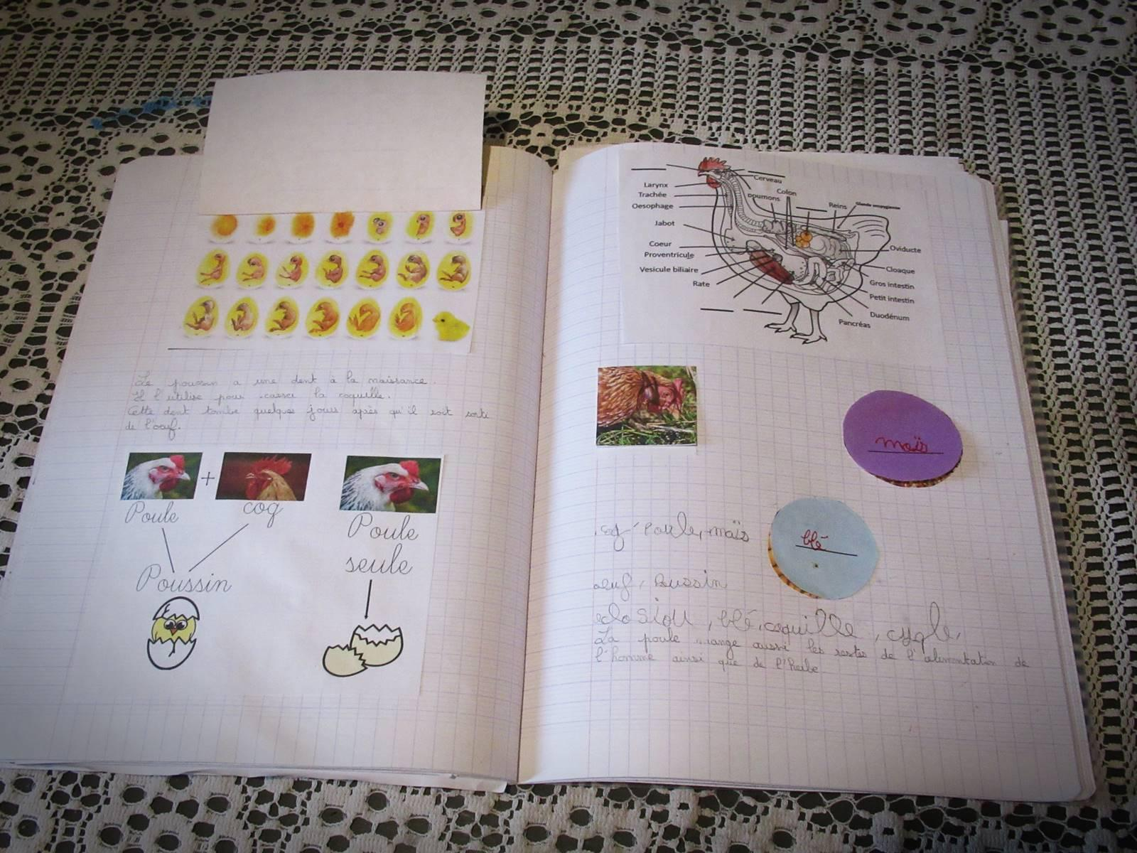Lapbook poule 6