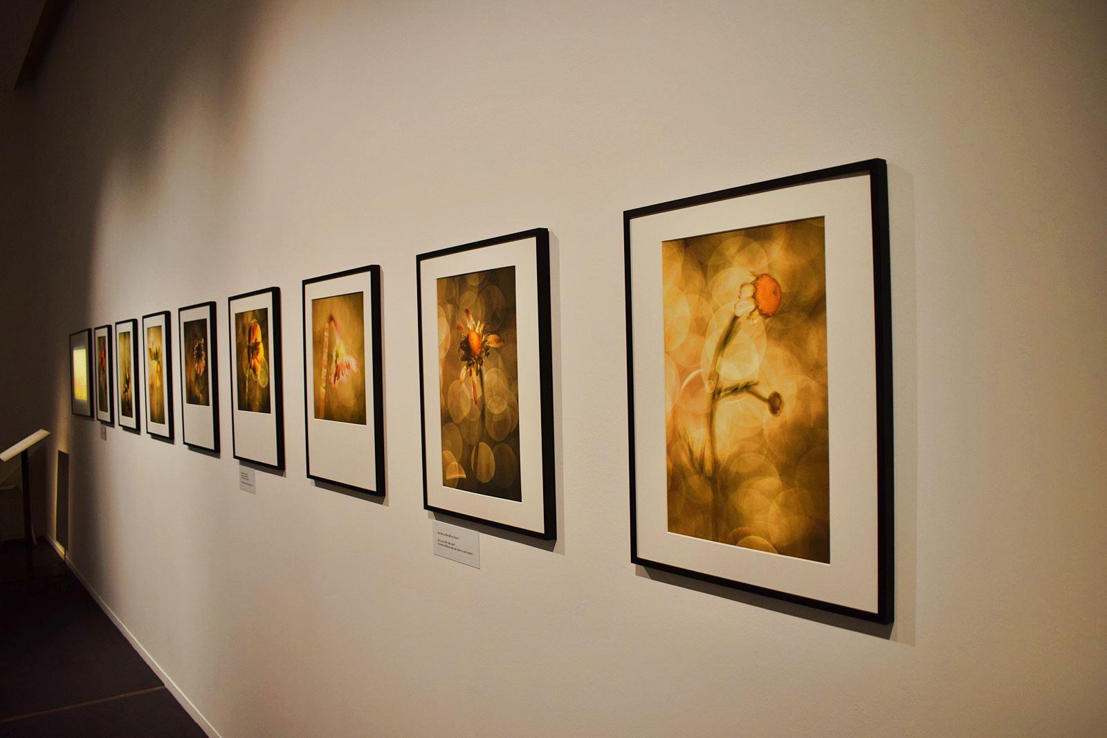 Le museum dhistoire naturelle de nantes 11