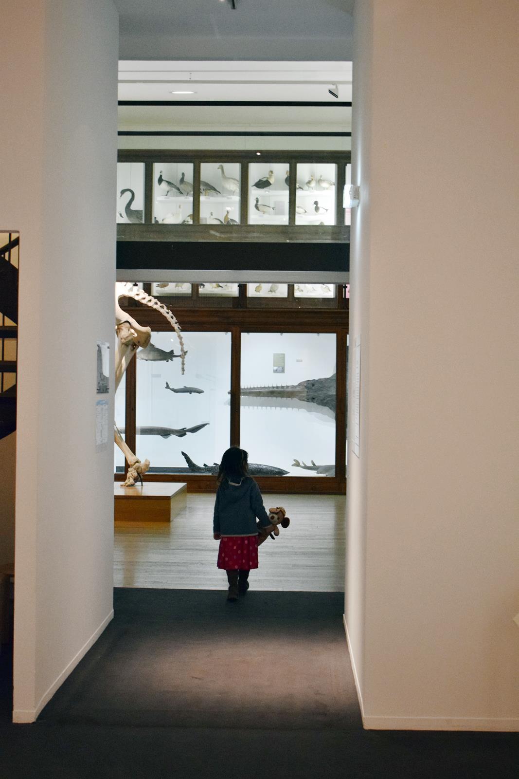 Le museum dhistoire naturelle de nantes 12
