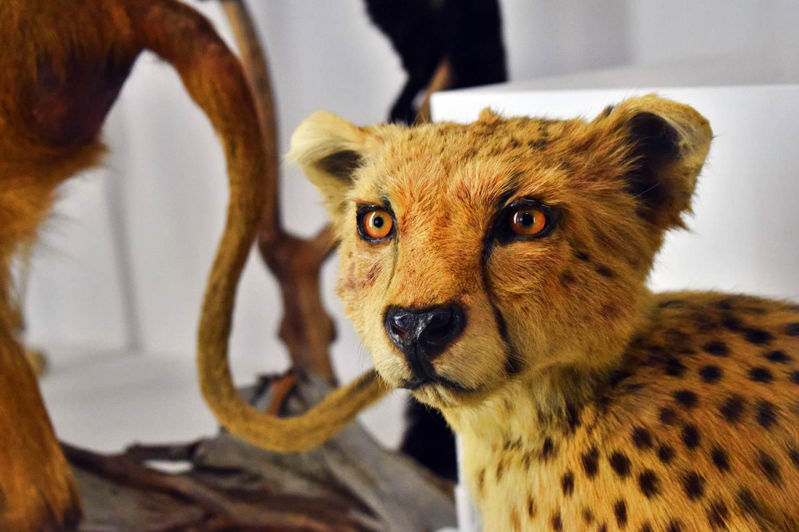 Le museum dhistoire naturelle de nantes 14