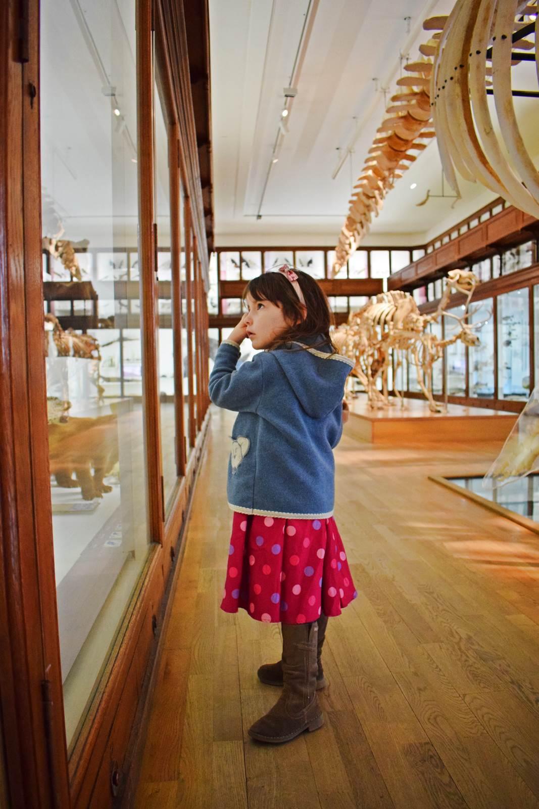 Le museum dhistoire naturelle de nantes 15