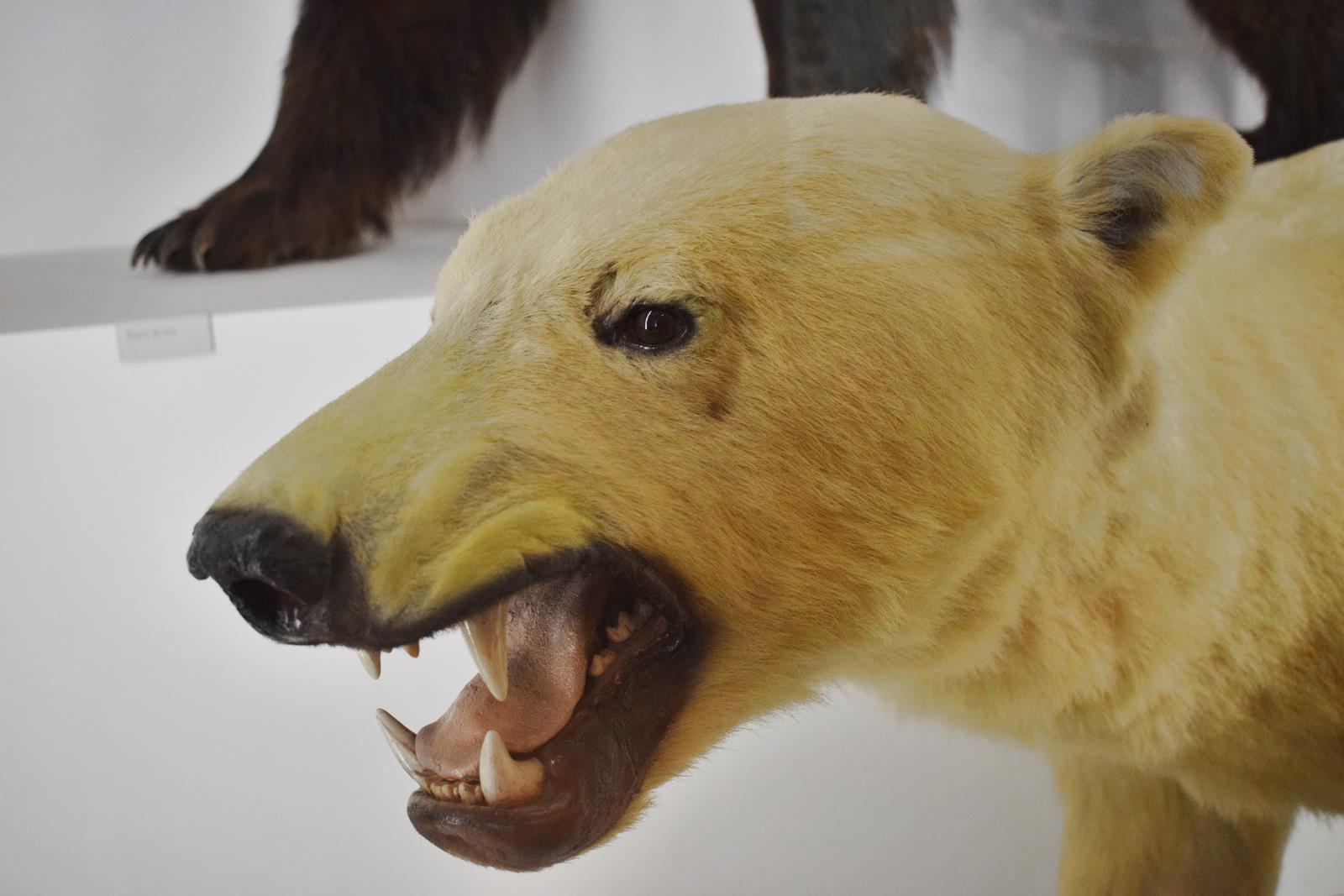 Le museum dhistoire naturelle de nantes 17