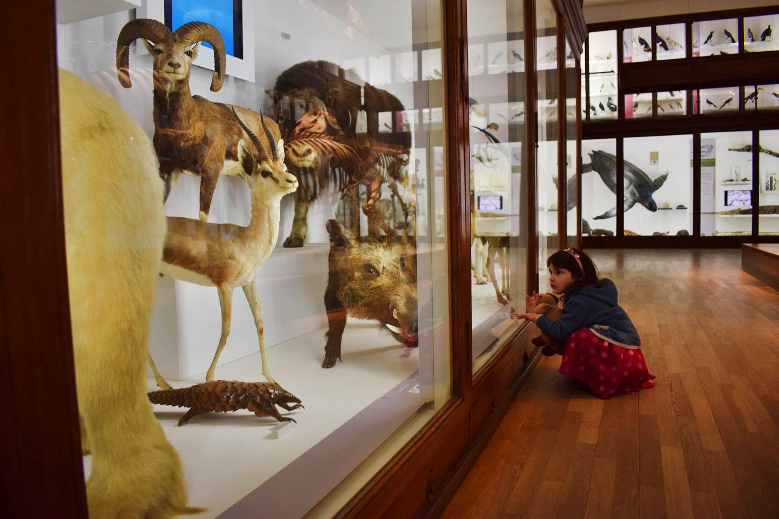 Le museum dhistoire naturelle de nantes 18