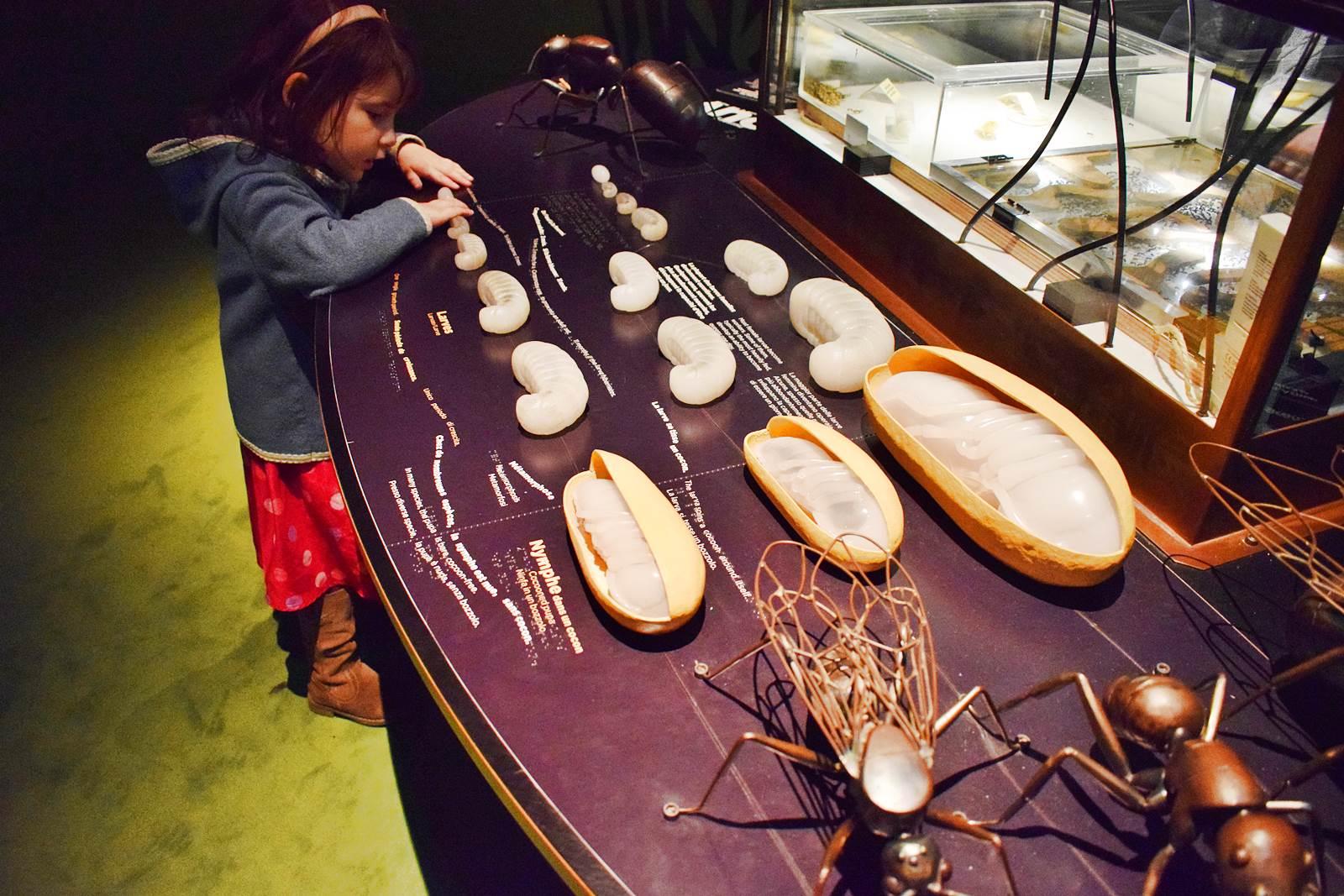 Le museum dhistoire naturelle de nantes 2