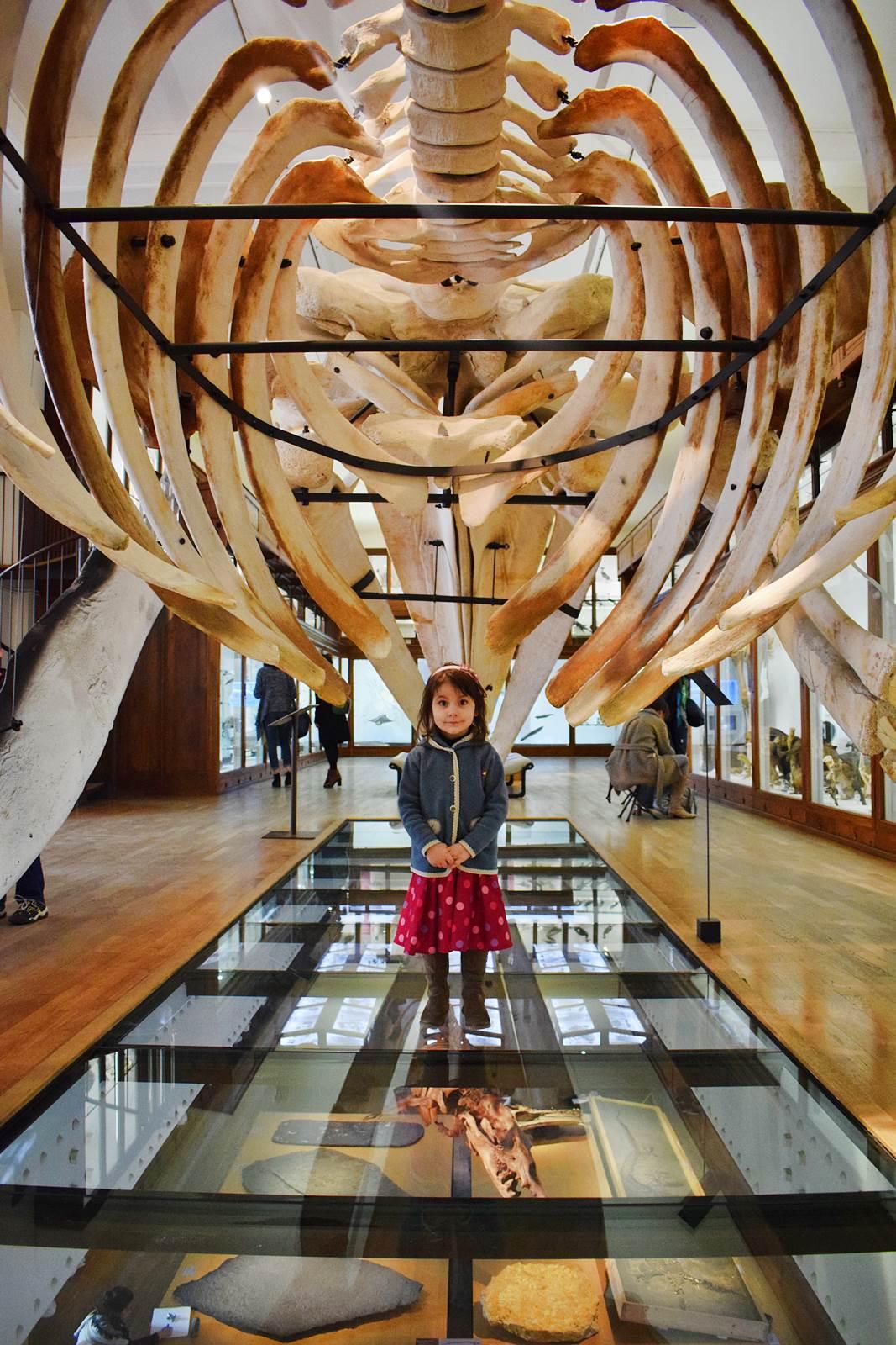 Le museum dhistoire naturelle de nantes 20