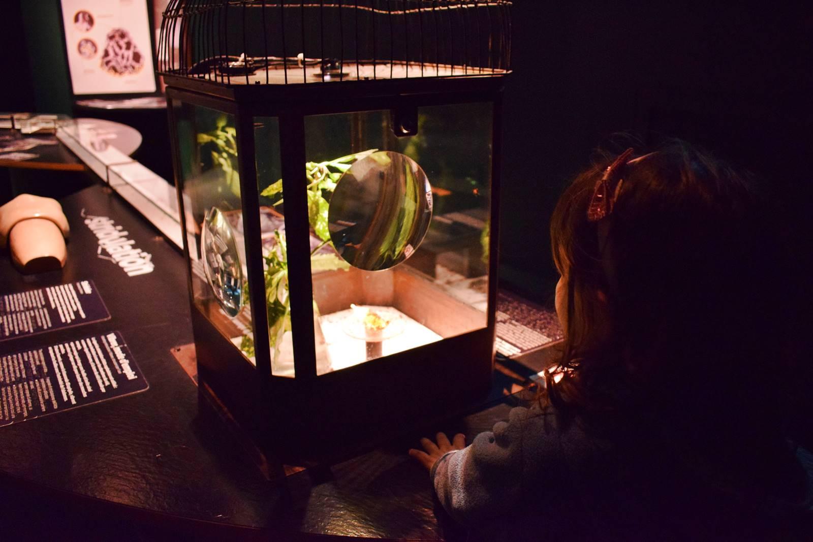 Le museum dhistoire naturelle de nantes 5