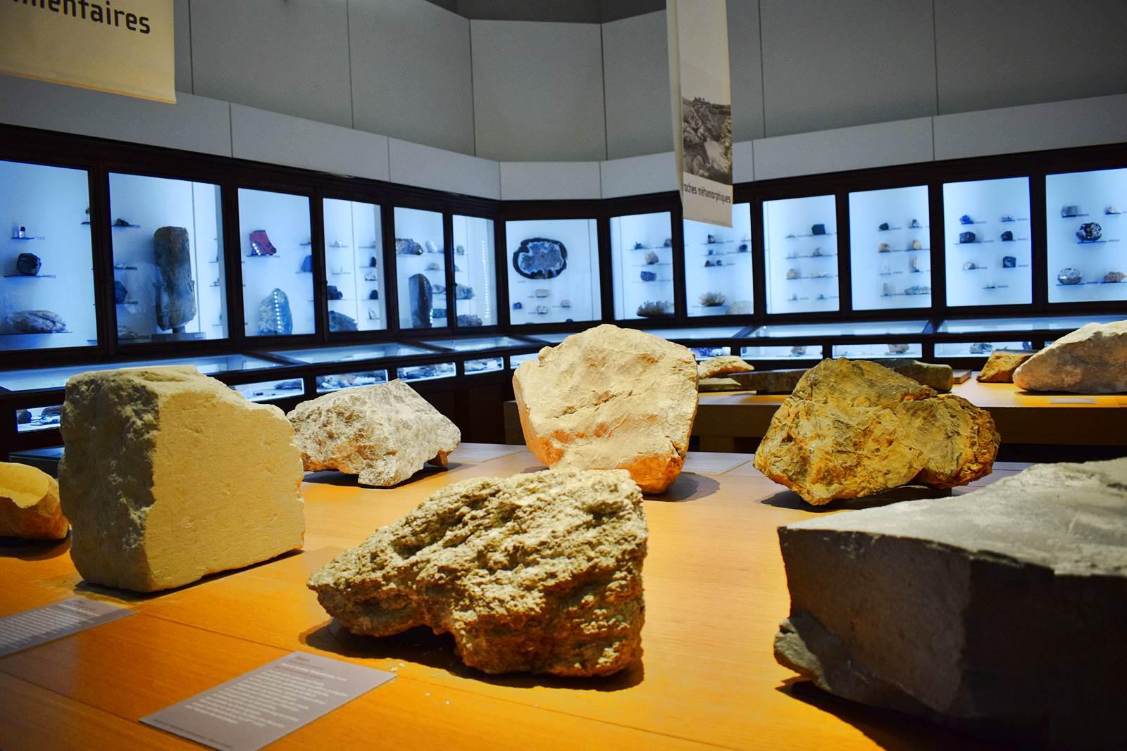 Le museum dhistoire naturelle de nantes