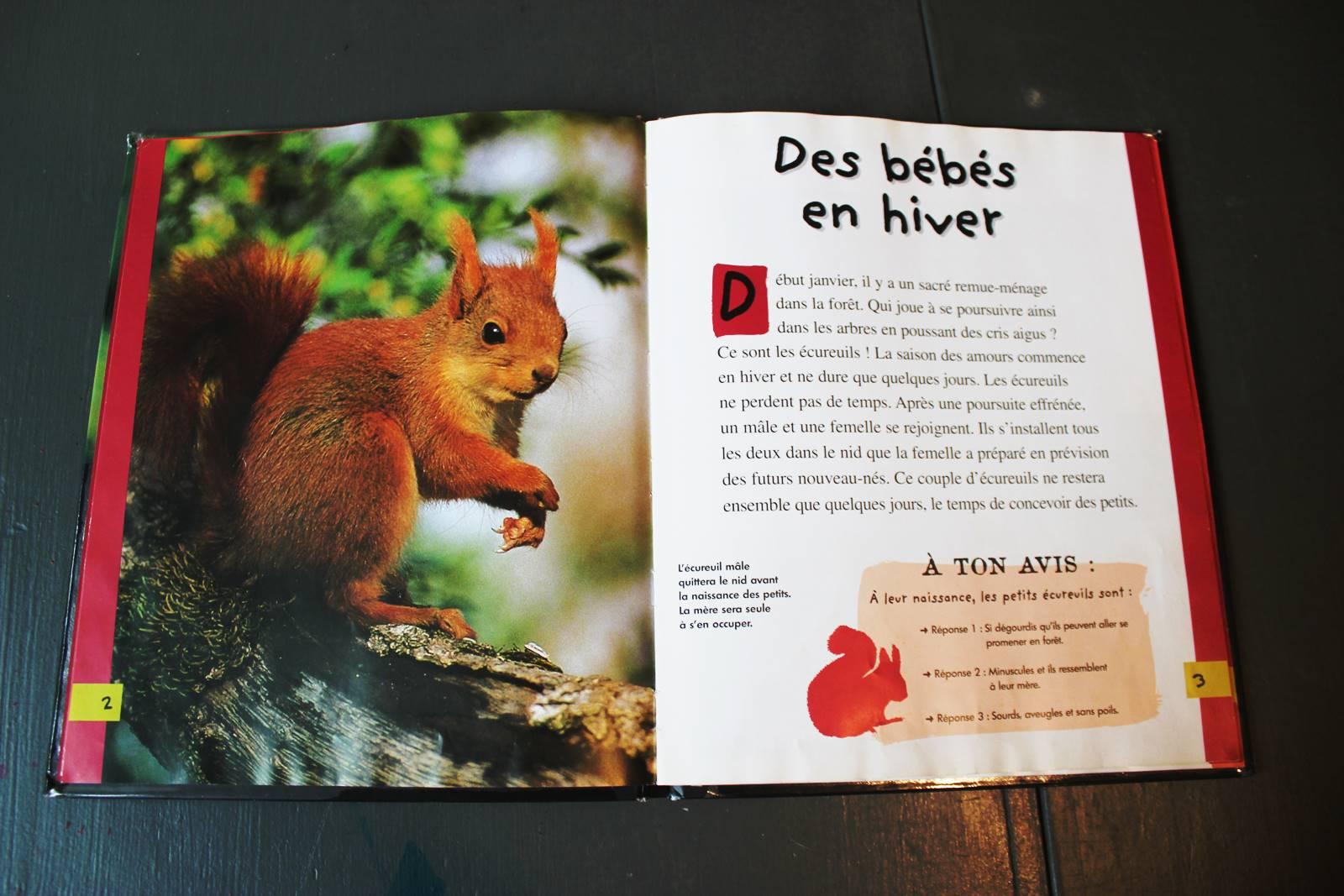 Le petit ecureuil mango jeunesse 1