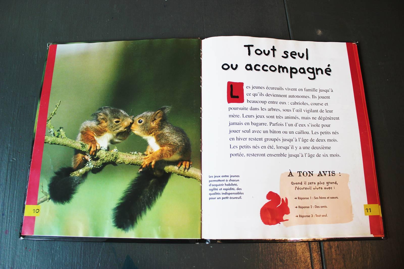 Le petit ecureuil mango jeunesse 2