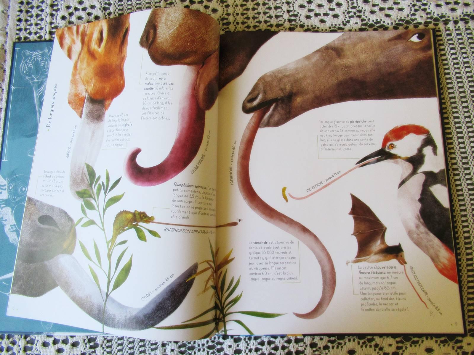 Les animaux grandeur nature 1