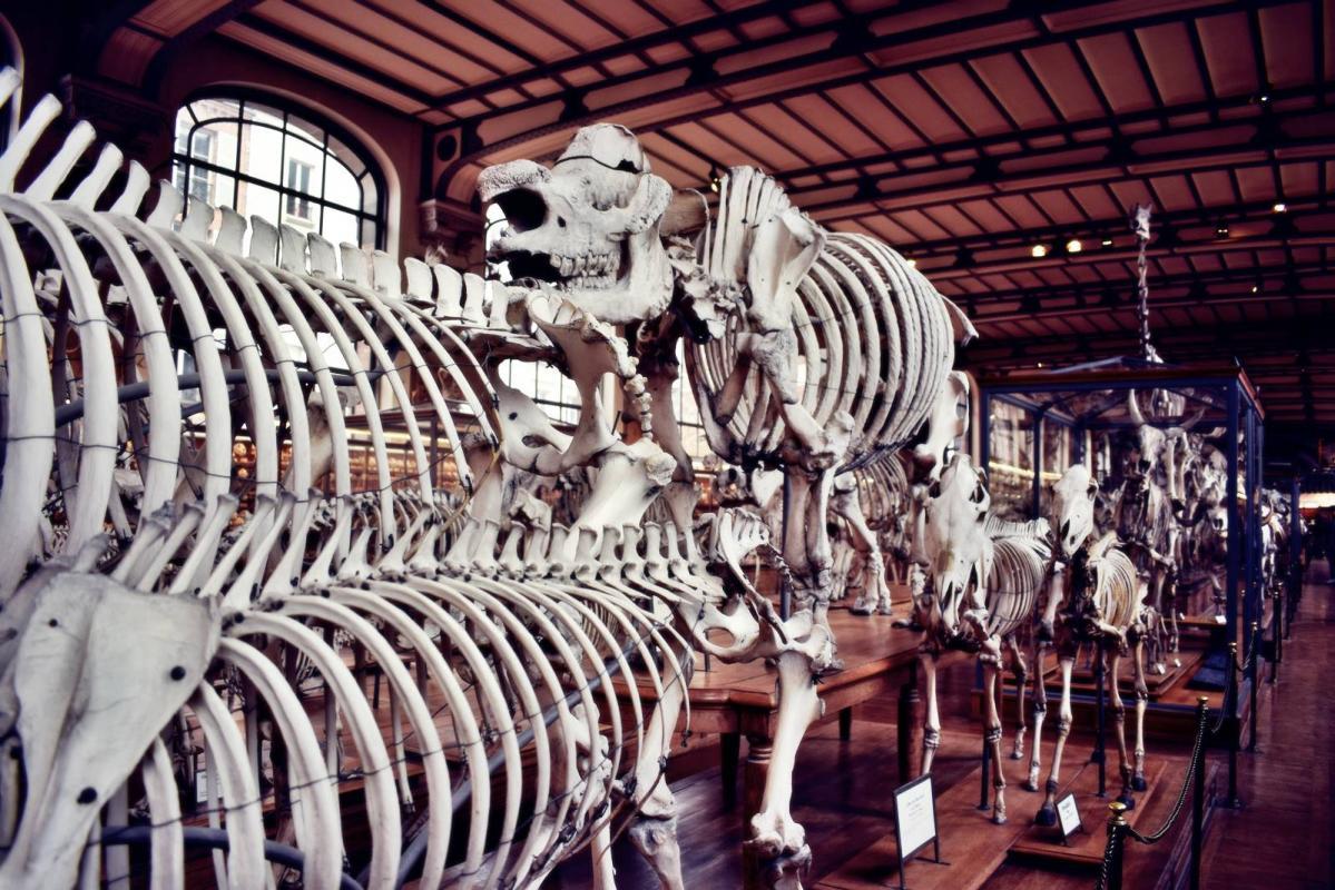 Museum d histoire naturelle paris 1