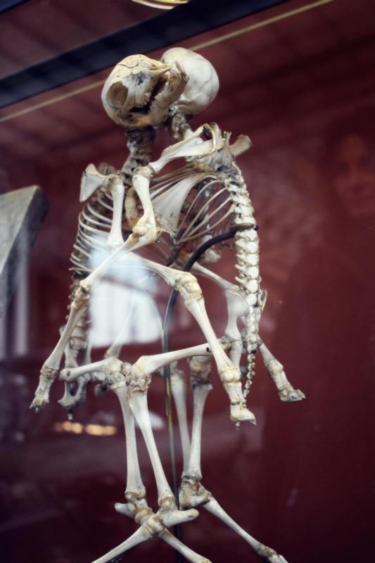 Museum d histoire naturelle paris 10