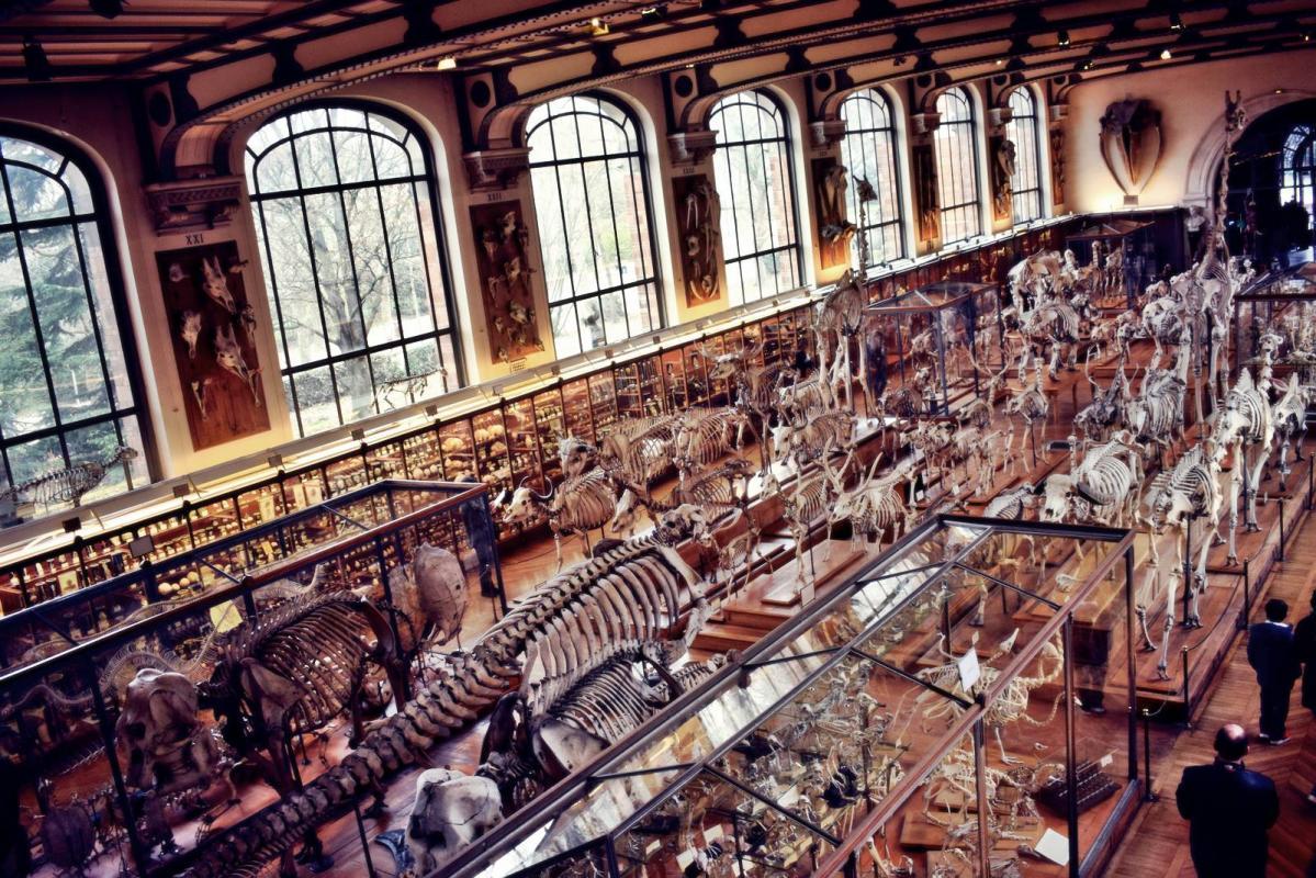 Museum d histoire naturelle paris 13
