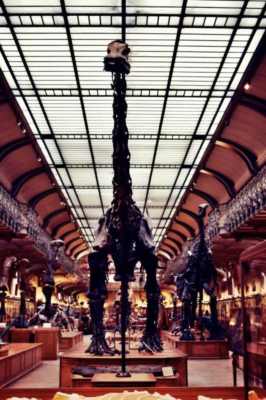Museum d histoire naturelle paris 15