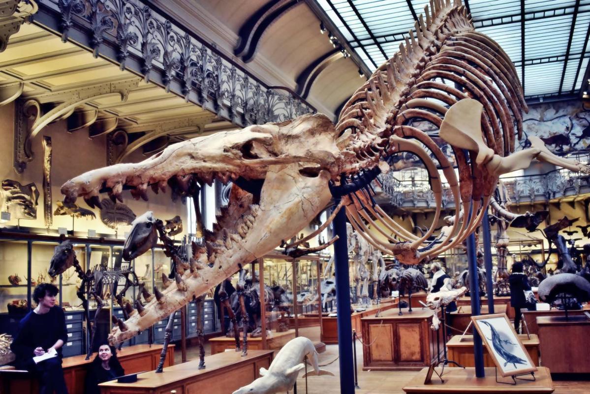 Museum d histoire naturelle paris 16